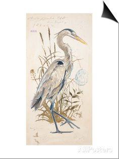 Great Blue Heron SwitchArt™ Print