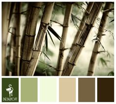 Bamboo 2: Green, sage, Beige, Brown, Sand - Colour Inspiration Pallet