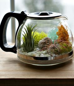 """""""Would You Like To Have A Cup Of Terrarium? Would You Like To Have A Cup Of Terrarium? A Cup Of Coffee? If you like coffee and planting, why not make this cute cup of terrarium? Mini Terrarium, Air Plant Terrarium, Garden Terrarium, Terrarium Ideas, Glass Terrarium, Planter Ideas, Air Plants, Indoor Plants, Indoor Water Garden"""