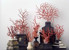 Collection of coral