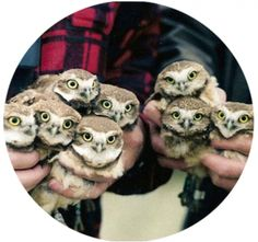 I have all the owls!
