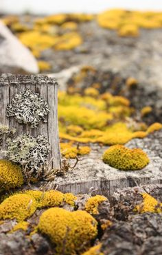 yellow and grey lichen and moss
