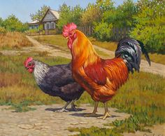 Mirror image of this layout would work. Rooster Painting, Rooster Art, Chicken Painting, Chicken Art, Arte Do Galo, Chicken Pictures, Beautiful Chickens, Bird Quilt, Chickens And Roosters