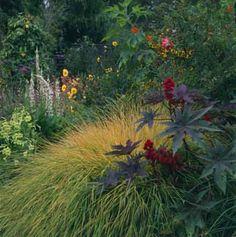 "Stipa arundinacea ""New Zealand Wind Grass"""