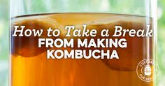 Making a SCOBY Hotel + Other Ways to Take a Break From Kombucha