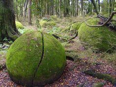 Inside a secluded forest by the edge of the magnificent Rangitikei River with it's sheer cliff faces lies the secret Ohingaiti Boulders! When wandering into the bush area you see one boulder…. then another and another!! It is quite amazing how all of a sudden all these perfectly round shaped, and large boulders appear in just one particular spot! Some split in two, others with trees growing out of them, yet others still perfectly round, and all of them covered in a rich green moss.