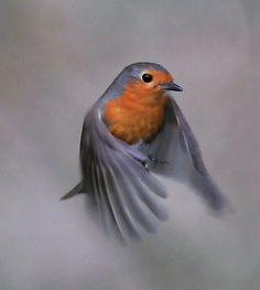 In flight      ROBIN (by Musicaltone)