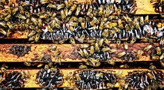 Food Photography by Jody Horton | Bees