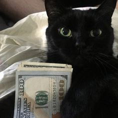 =^..^= Kitten with her paws on the cash, which will promptly be empty when she pays her bills. Lol