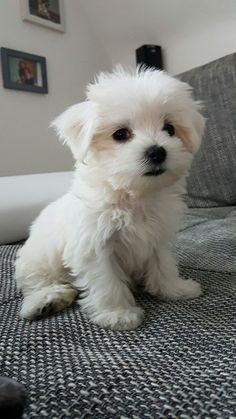 Super Cute Puppies, Cute Baby Dogs, Cute Little Puppies, Cute Dogs And Puppies, Cute Little Animals, Cute Funny Animals, Tiny Puppies, Doggies, Baby Animals Pictures