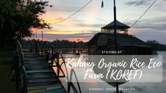 KOREF farm stay is rustic accommodation and lots of activities for families and groups. We loved getting a taste of rural Malaysia, and the food!