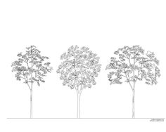 Architecture Drawing Of Trees simple drawing trees section architecture sanaa - google search
