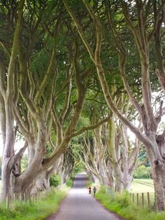 If you want to go off the beaten path in Ireland and wow your friends with spectacular photographs, you need to find the Dark Hedges. Hedges, Northern Ireland, The Darkest, Paths, Irish, To Go, Bucket, Dreams, Travel
