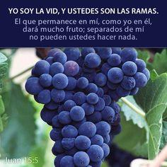Yo Soy la Vid, y ustedes son las ramas. Él que permanece en Mí, como Yo en Él, dará mucho fruto; separados de Mí no pueden ustedes hacer nada