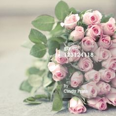 Stock Photo : Bouquet of pink roses