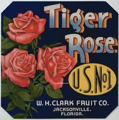 9x9 TIGER ROSE Vintage Florida Citrus Crate Label