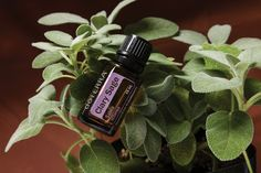 With uses dating back to the Middle Ages, Clary Sage essential oil includes relaxing and soothing properties that help with rejuvenation and calming of the skin. #essentialoilspotlight