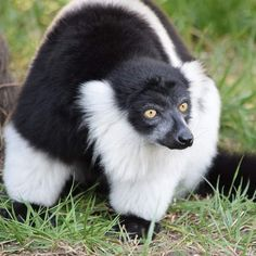 Panda Bear, Yoga, Animals, Beautiful, Instagram, Rabbits, Dog, Cute Animals, Love