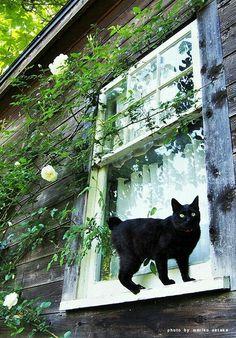 ❤️❤️ LOVE BLACK CATS ❤️❤️