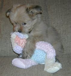 Puppy hugging a plush toy