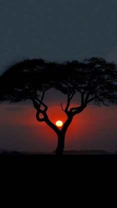 #SUNSET~ #ÁFRICA *SUB SAHARIANA*... Scenery Photography, Moon Photography, Landscape Photography, Amazing Sunsets, Amazing Nature, Images Ciel, Angel Artwork, Shadow Silhouette, Painting Of Girl