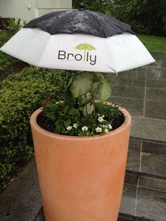 Brolly Protecting Young Plants From A Typical Ny Summer Thunderstorm Too Much Rain Will Kill