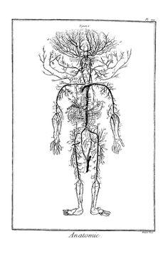 Anatomie Planche XII