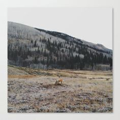 Silverton Fox Stretched Canvas by Kevin Russ - $85.00