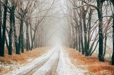 Zima, Droga, Mgła, Drzewa