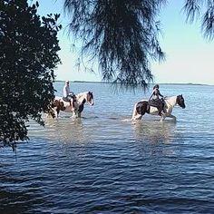 Horseback Riding in Florida's Natural Outback