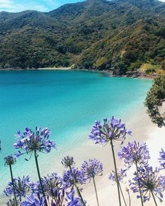 Oke Bay, New Zealand @mikimacfarlane☽ ☼