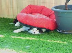 Tagged with International Cat Day; Funny Cats, Funny Animals, Cute Animals, Cat Club, Photo Chat, Cat People, Cat Sitting, Funny Animal Pictures, Hilarious Pictures