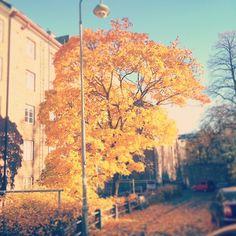 Autumn as its best in Helsinki. #kokosomeyewear #autumn #timeforcolor #red #orange #yellow