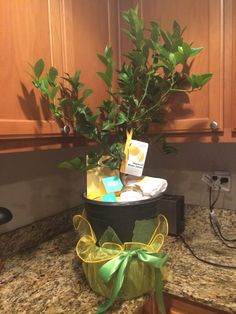 Meyer lemon tree housewarming gift for Tonya - gifts in theme of yellow and green
