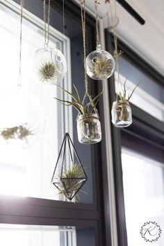 Viherkasvijengini erikoisimmat tapaukset taitavat olla ilmakasveja. Olen ihan näiden harmahtavien kasvien pauloissa, ja huomaan määrän h...