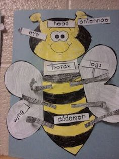 insect labeling...what a great chart...or even a bulletin board with student-made bees around it!