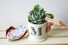 Mother's day Succulent Gift Set (Succulent in a mug + French Bar Soap)