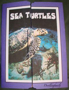 17ecb522f4fc3862254a0da5cee70aa6--lap-books-interactive-notebooks Ocean Zones Worksheet For Kindergarten on middle school, 2nd grade, black white, animals twilight,