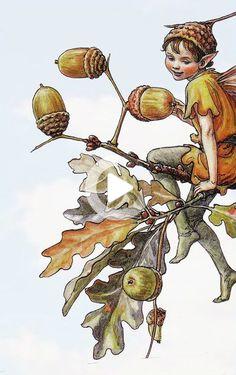 Flower Fairies by Cicely Mary Barker, the acorn fairy, oak tree. Cicely Mary Barker, Illustration Noel, Fantasy Illustration, Flower Fairies, Fairy Pictures, Vintage Fairies, Norman Rockwell, Fairy Art, Illustrators