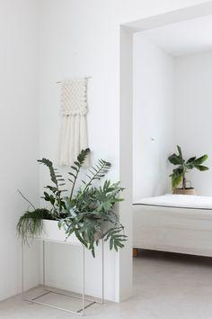 Une jardinière immaculée pour une plante d'intérieur stylée