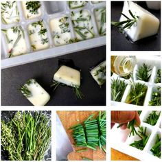 The Domestic Curator: HERB ICE CUBES