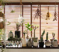 OMGplants | hydroponic-culture: succulent plant