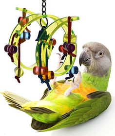 Best price on Acrylic Activity Play Tunnel Small Bird Toy with Jingle Bell //   See details here: http://zooresource.com/product/acrylic-activity-play-tunnel-small-bird-toy-with-jingle-bell/ //  Truly a bargain for the inexpensive Acrylic Activity Play Tunnel Small Bird Toy with Jingle Bell //  Check out at this low cost item, read buyers' comments on Acrylic Activity Play Tunnel Small Bird Toy with Jingle Bell, and buy it online not thinking twice!   Check the price and customers' reviews…