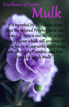 surah mulk Islam Hadith, Islam Quran, Alhamdulillah, Quran Verses, Quran Quotes, Islamic Quotes, Surah Al Quran, Losing My Religion, Noble Quran