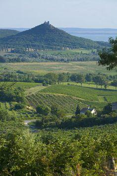 vineyards, Szigliget Peninsula, Lake Balaton, Hungary. Photo: Jon Arnold Images, Doug Pearson