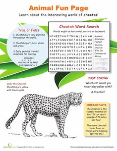 Worksheets: Run with the Cheetahs