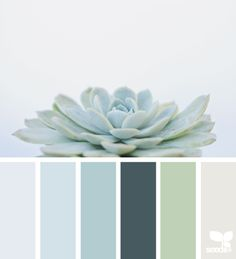 Succulent hues | design seeds | Bloglovin'