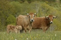 Farm Animals c/o Ardea - wildlife pets environment