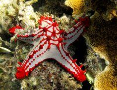 28 ottobre 2013: le stelle marine di Chale! (Foto di Paolo Bonvini)