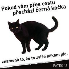 English Jokes, Story Quotes, Just For Fun, Neko, True Stories, Funny Memes, Feelings, Cats, Animals